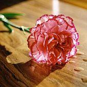 Zdroj: explore-flowers.co.uk