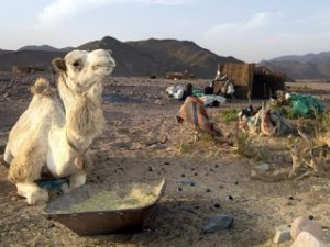 beduini_TOP