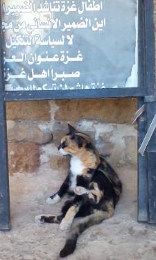 Toto ke malá pozvánka k budoucímu seriálu 100+1 izraelských koček.
