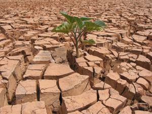 1116_cl21_0213_drought