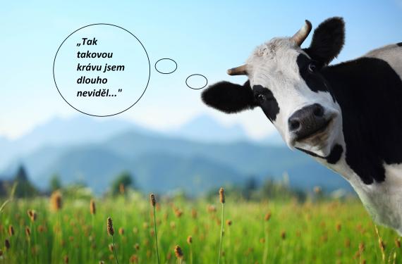 Kráva Shekel malování