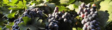 winetourban