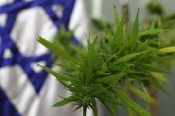 Izflag-cannabis-520x281