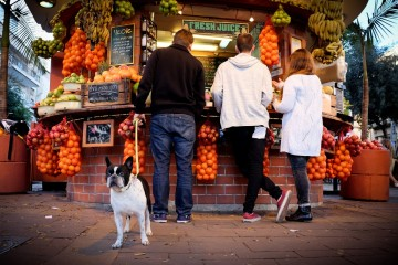 street_dog_fruits_israel_stand_telaviv_fuji_bulldog-308934